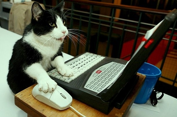 cats developers